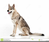 Clipart German Shepherd Dog Image