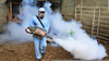 Spraying Insecticides Image