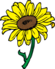 Sunflower In Color Clip Art
