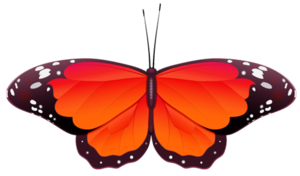 Butterfly No Back Orange Image