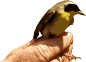 Yellowthroat Bird Clip Art