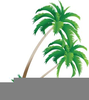 Clipart And Palm Tree Image