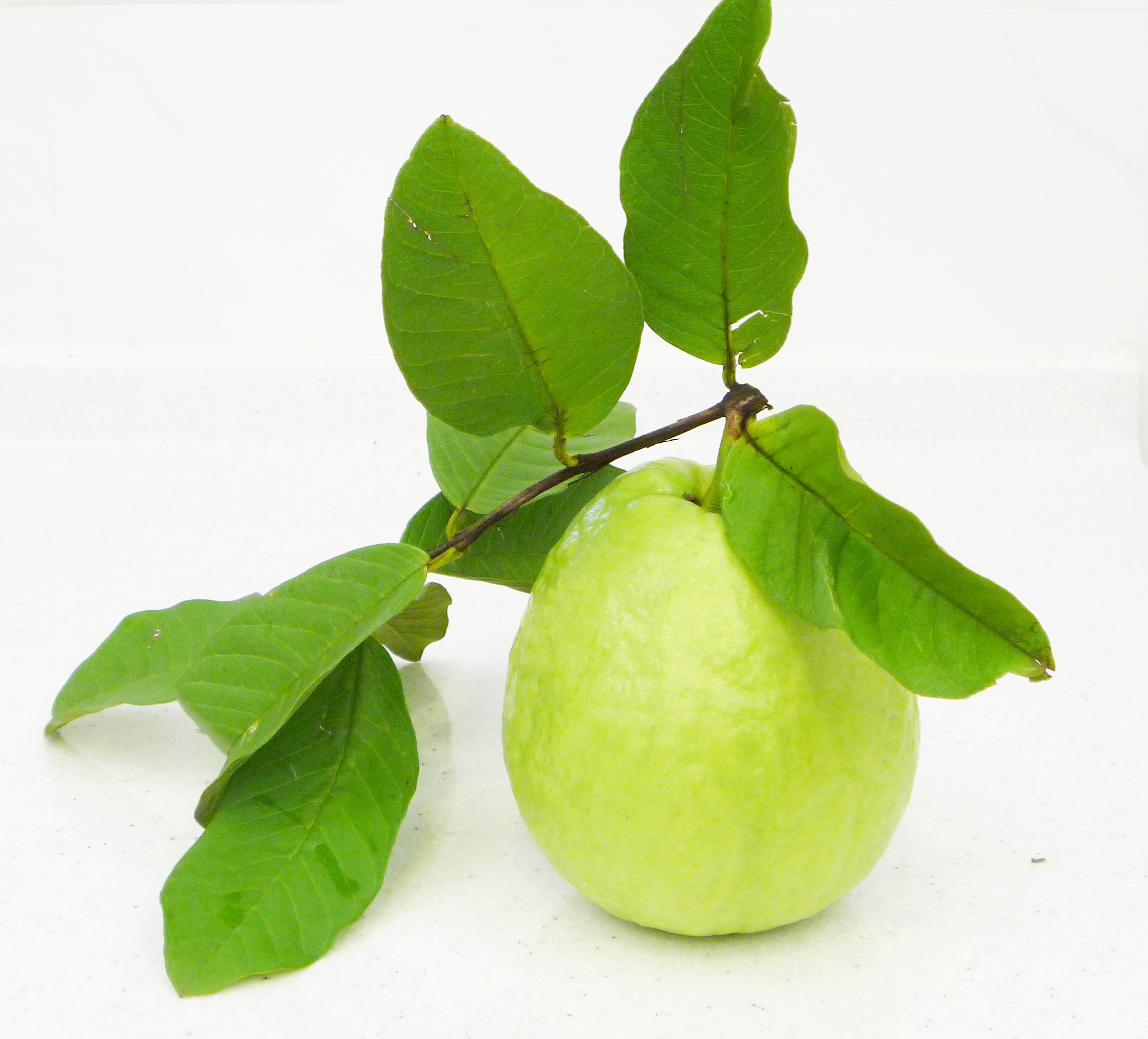 Guavas Clipart Guavaxx | Free Images ...