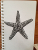 Starfish Drawing Pencil Image