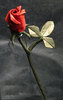 Rose Day Scraps Image