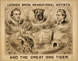 Leonzo Bros. Sensational Artists And The Great Dog, Tiger Image