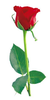 Bouquet Of Red Roses Clipart Image