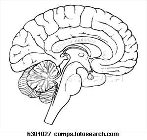Brain Sagittal Section H   Free Images at Clker.com ...