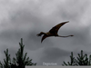 Pterosaur Sightings Image