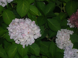 Flower Bush Image