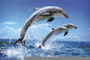 Submarine Dolphins Clipart Image