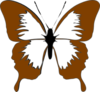 Blue Butterfly Brown Image