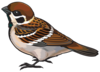 Sparrow Png Clipart Image