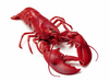 Boiled Lobster Image