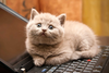 Cat Wants To Tell You Laptop Image