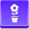 Free Violet Button Pot Flower Image