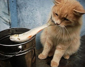 Cat With Fish Image