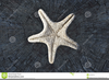 Clipart Starfish Blue Image