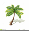Palm Tree Clipart Black And White Image