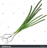 Free Green Onion Clipart Image