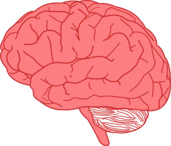 brain clip art at clker com vector clip art online royalty free rh clker com brain clipart thinking brain clipart free