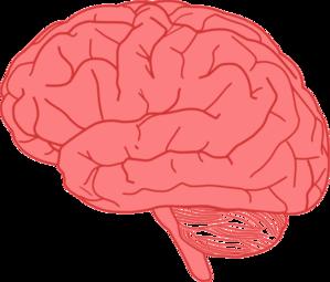brain clip art at clkercom vector clip art online