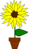 Sunflower In A Pot Clip Art