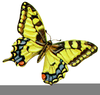 Butterfly Clipart Art Pictures Image