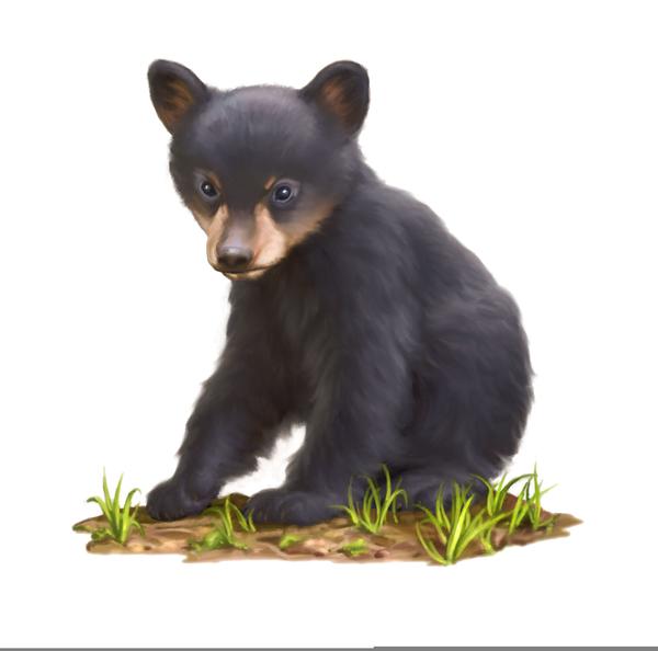 Black Bear Cub Clipart | Free Images at Clker.com - vector ...