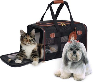 Pets And Travel Image