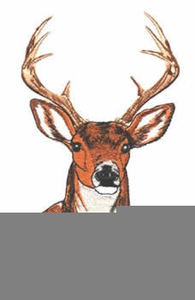 Deer Head Clip Art - Royalty Free - GoGraph