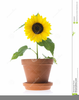 Clipart Flower Sunflower Image