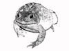 Toad Stamped Image