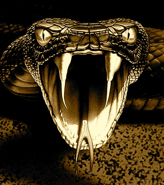 Red viper snake logo - photo#20