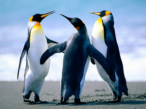 Penguins Image