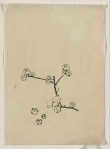 [a Tree Branch With Blossoms] Image