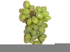 Grapevine Clipart Free Image