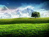 New Bliss Tree Green Landscape Scenery Wallpaper Image