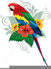 Free Clipart Tropical Birds Image