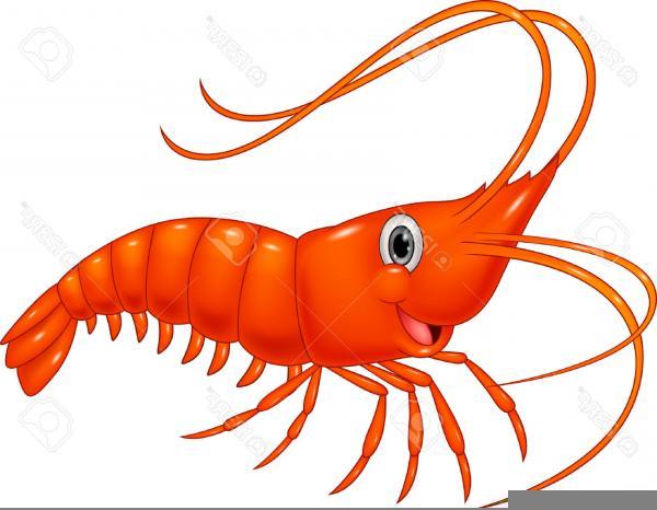 Clipart Jumbo Shrimp   Free Images at Clker.com - vector ...