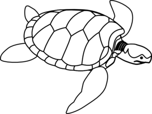Swimming Turtle Clip Art
