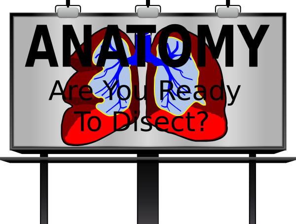 Anatomy Sign Clip Art at Clker.com - vector clip art online, royalty ...