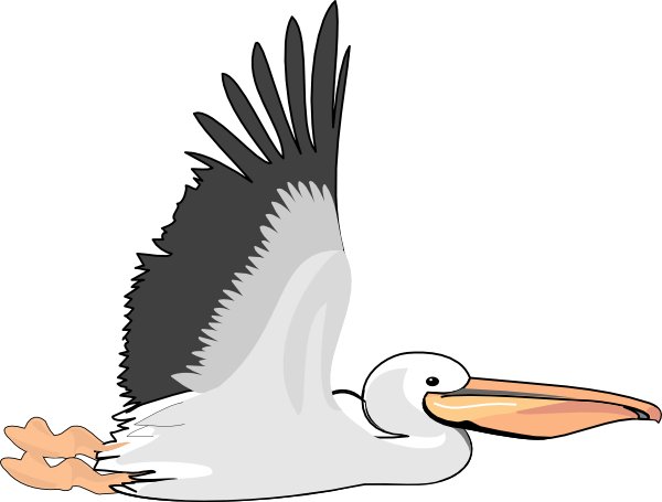 how to draw a easy pelican fling