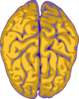 Nm Brain Clip Art