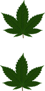 Cannabis Leaves For Pasties Clip Art