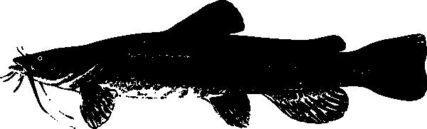 Catfish Clip Art at Clker.com - vector clip art online, royalty ...