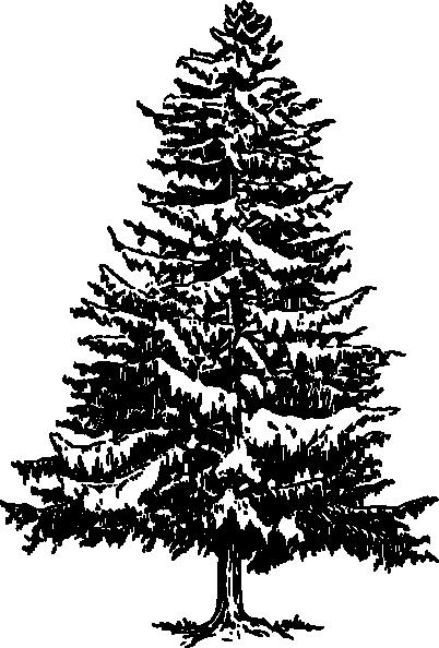 pine tree clip art at clkercom vector clip art online