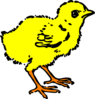 Chick In Color Clip Art