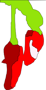 Chillies Clip Art