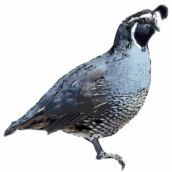 clipart of quail - photo #11